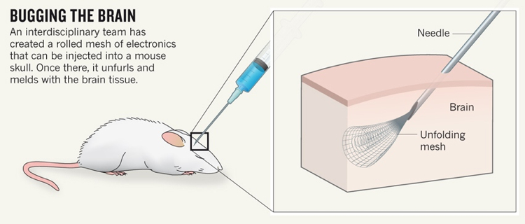 Injectable brain implant can record and stimulate individual neurons brain mesh in mouse ccuart Gallery